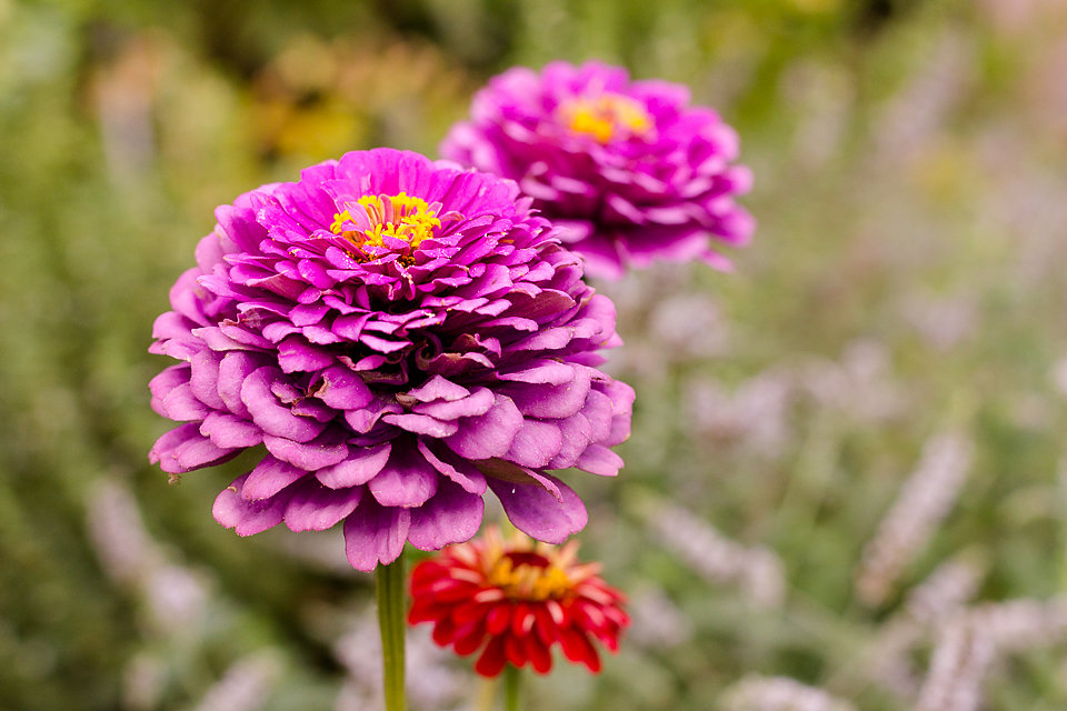 Blumenbracht
